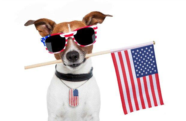 Memorial Day dog image