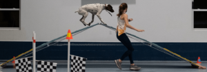 Dog and Trainer on Agility A-Frame